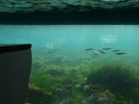 Visione subacquea
