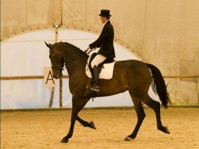Pistoia Equestrian Center