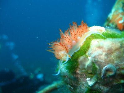 Sub Murena Diving