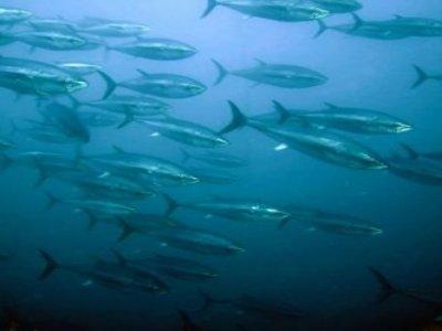 Tonnare Diving Center Escursione in Barca