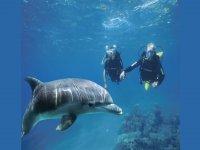 guardando gli animali del mare!