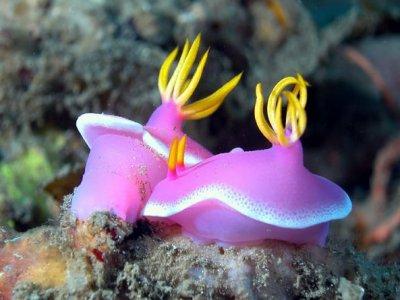 Octopus Dive Club
