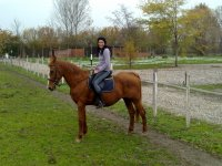 Riding exercises in the rectangle