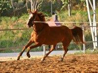 Giostra cavallo maneggio nel Veneto