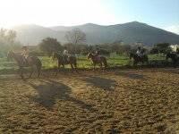scuola di equitazione e pensione x cavalli