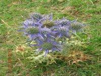 La flora di montagna