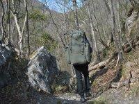 Camminata nel bosco