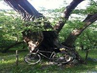 Via Francigena, cicloturismo