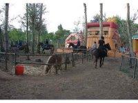 Corsi e trekking a cavallo