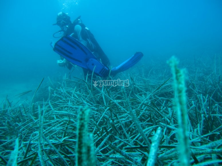 Paesaggio sottomarino/diver 2