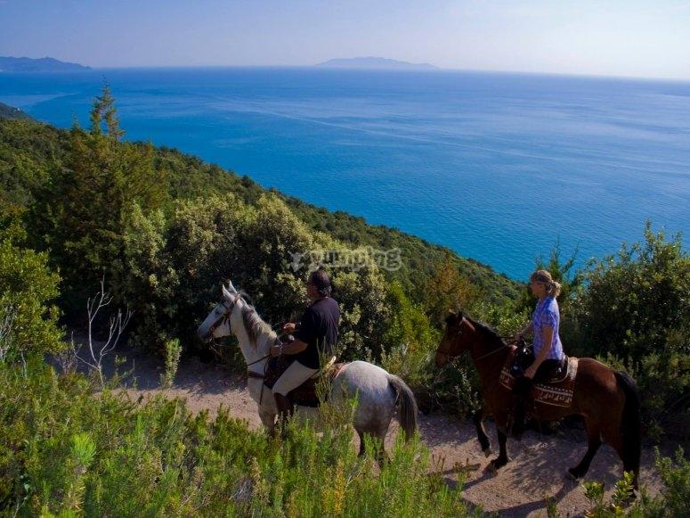Horse coast and sea