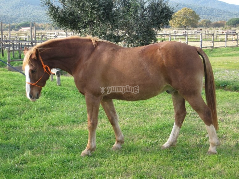 Only purebred horses