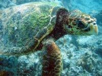 Incontro con tartaruga