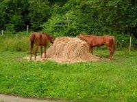 I cavalli che mangiano