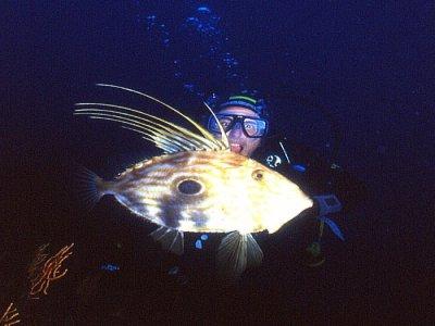 Unica Diving Elba