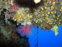 Coralli in Fiore