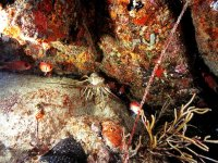seabed images