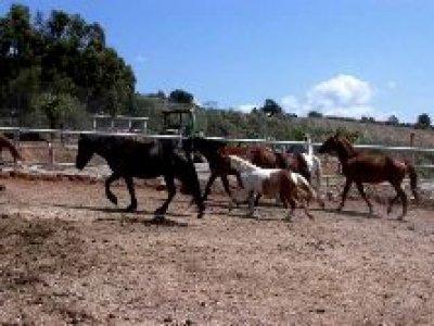 Agriturismo Il Forno Antico Passeggiate a Cavallo