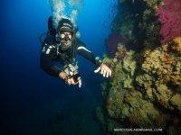 daytime diving
