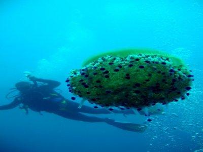 Soleado Diving Center