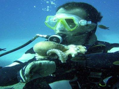 Anthias Diving