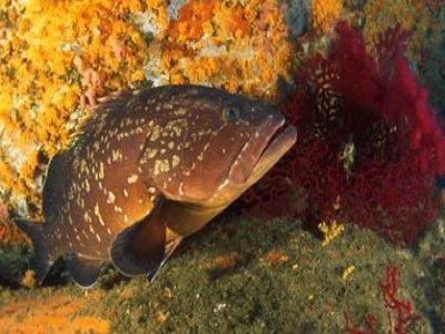 No Limits Center Diving Mediterraneo