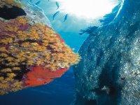 Underwater Beauties