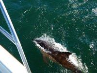 In compagnia dei delfini