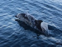 dolphins on the island of elba
