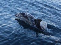 delfini all isola d elba
