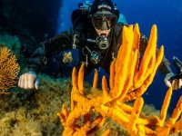 scopri la fauna marina