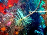 Colori Sottomarini