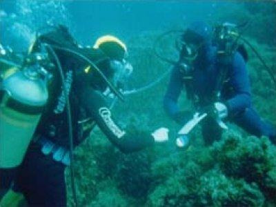 L'Isola Diving Center