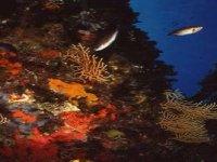 I Colori Sottomarini