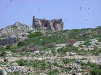La Torre Dell'Isola