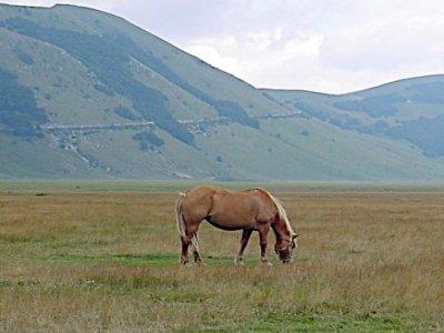Centro Equestre Magredi Vivaro