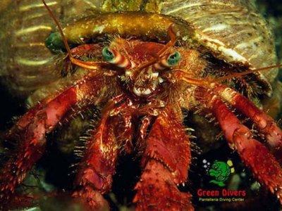 Green Divers
