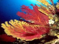 Incredible underwater riches