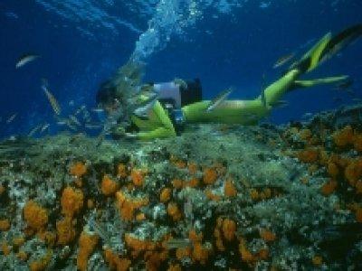 Linosa Diving Center