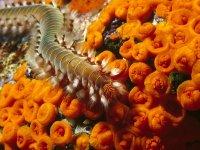 Fauna e Flora Marine