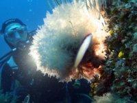 Marine Nature