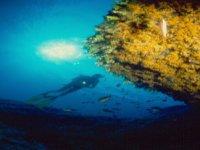 Sub nel Mare