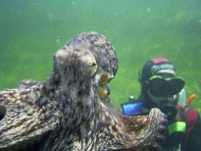 Blueabyss Diving Center
