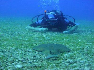 Diving Saralu