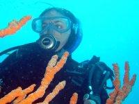 Between the Corals