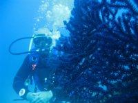 Sub tra i Coralli