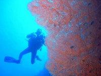 Vicino ai coralli