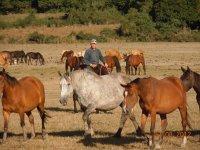 Lezioni equitazione L Aquila