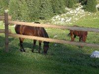 Pascoli per cavalli