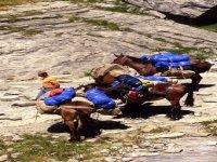 Trekking con i muli
